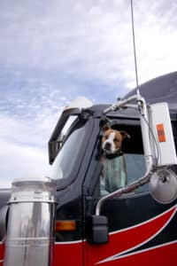 There are many benefits to having your pet with you while driving. Bay & Bay, a trucking and logistics company, encourages drivers to bring their dog or cat with OTR.